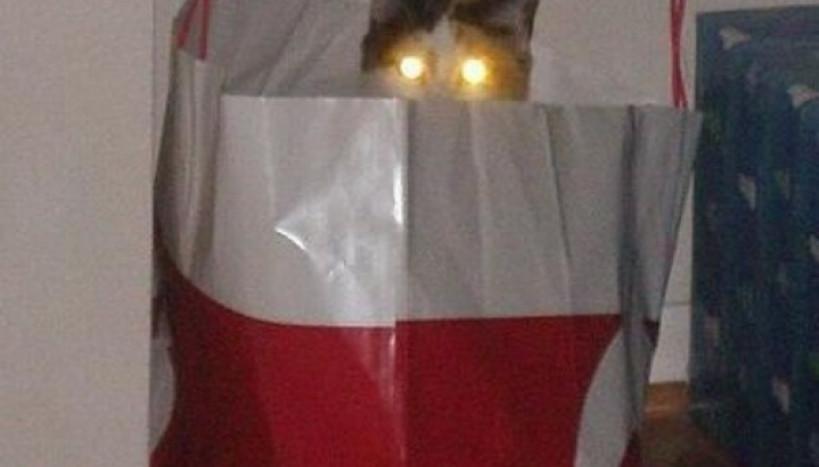 Gatos com laser