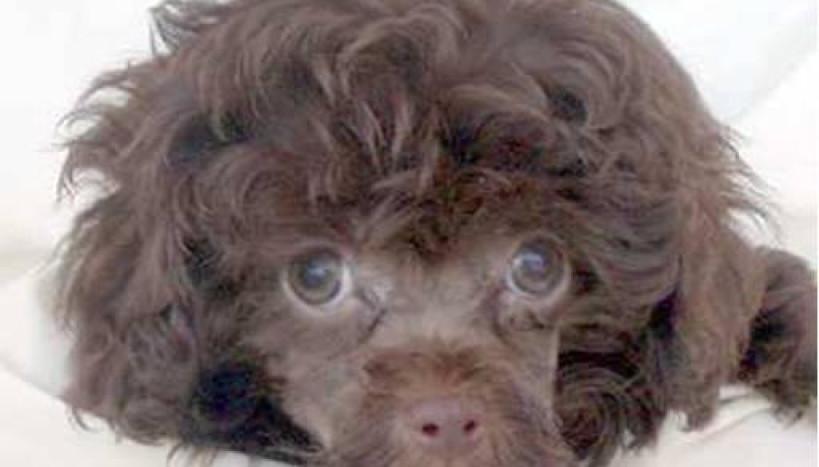 Cachorro do Raul