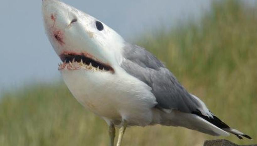 Pássaro-Tubarão
