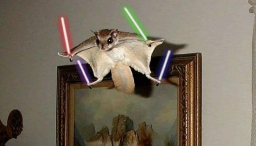 Esquilo Jedi