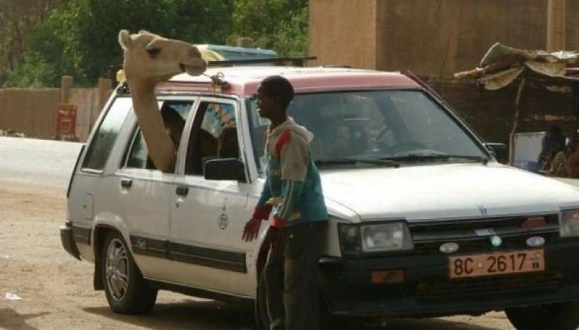 Camelô Móvel
