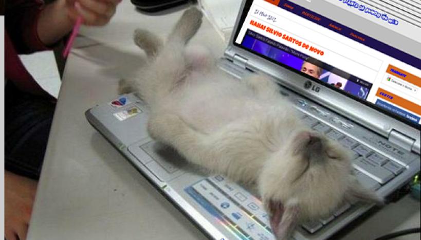 Gato no PC