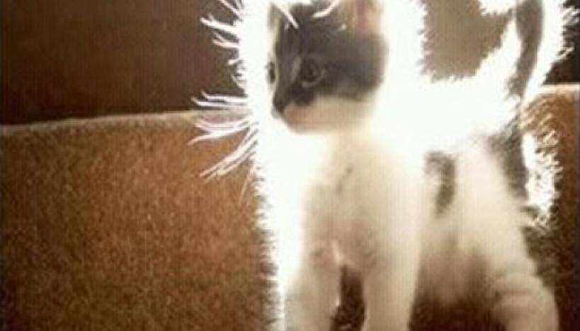 Gato Super Sayajin
